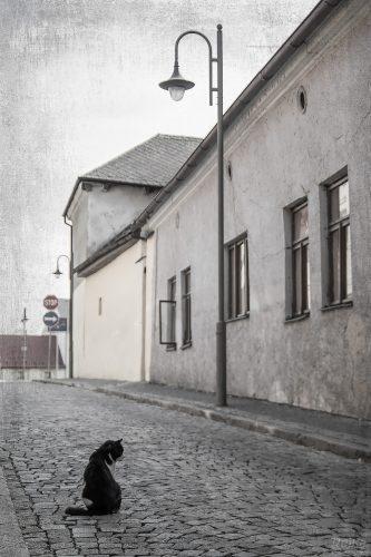 Kočka v Benátkách nad Jirezou od Rejky č. 1