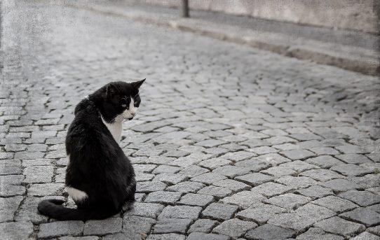 Kočičí focení podle Rejky