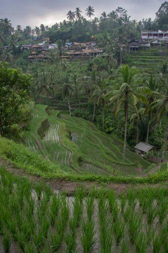 Rýžová pole Tegalalan - foto Rejka Balcarová