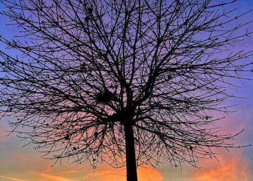 silueta stromu bez listí proti fialová oranžové obloze, fotka ze série podzimní fotografie z Jesenice